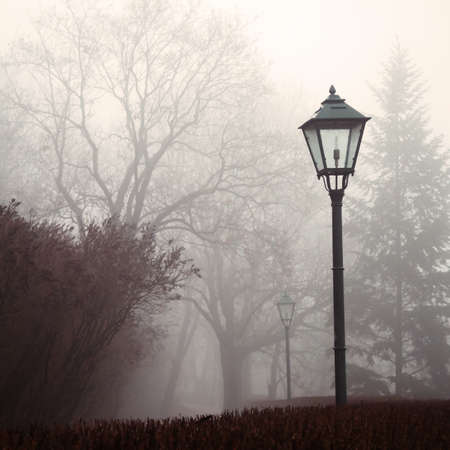 Street lamp and forest park in fog photo