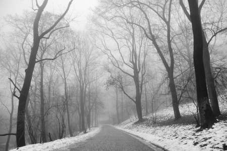 Winter park trees in fog in black and white tone photo