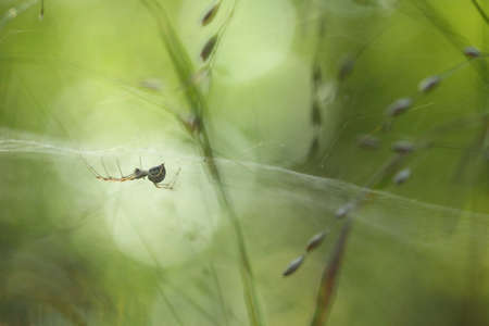 Small Spider in its web with smooth green bokeh background photo