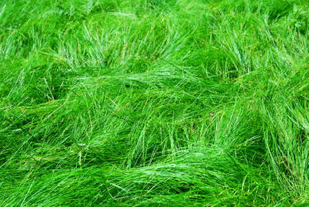Forest fresh green grass texture background photo