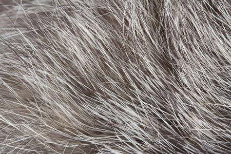 Abstract Soft Fur Macro Texture Stock Photo - 18170020