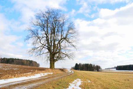 Single leafless tree standing in the middle of resting fields