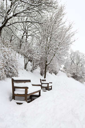 Forest park with benches covered in heavy snow photo