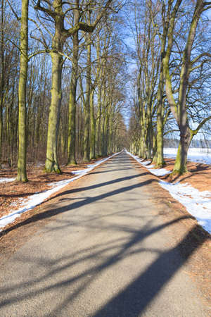 Long linden leafless tree alley in sunny day Stock Photo