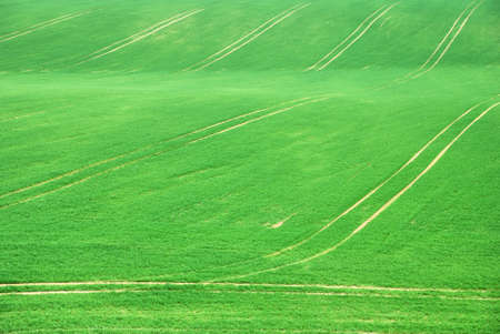 Green empty field with tracks in springtime photo