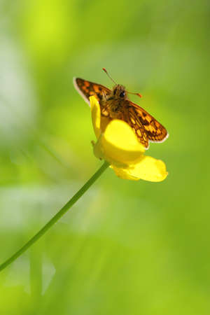 Beautiful butterfly sitting on a flower in spring photo