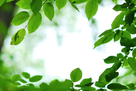 Spring green leaves framing background Stock Photo