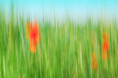 unspecified: Abstract grain field with red corn poppy