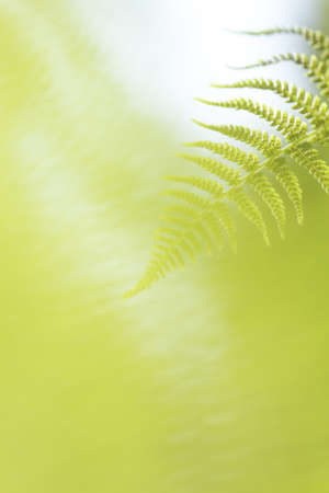 Abstract lush forest green fern background Stock Photo