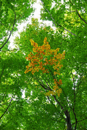 Green leaves in a forest changing color photo