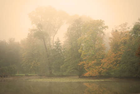 Moody autumn morning in a forest park with a calm pond water photo