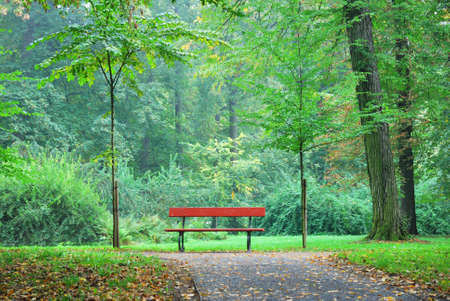 Single wooden bench in a forest park photo