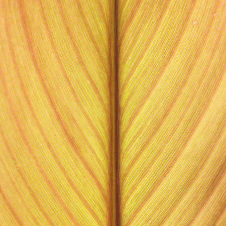Abstract yellow leaf lines background texture photo