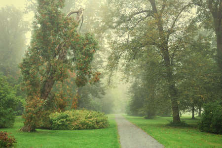 Forest park footpath and trees in morning fog photo