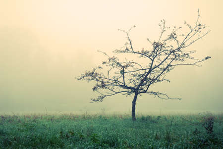 Small tree without leaves in morning autumn fog photo