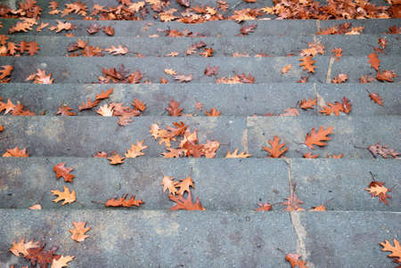 topdown: Broad stone staircase with fallen autumn leaves