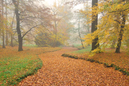 rivulet: Forest park and dry rivulet bed with fallen leaves in misty autumn Stock Photo