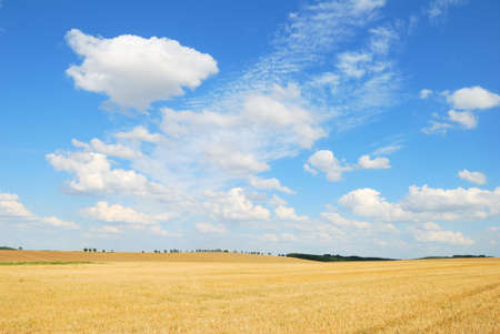 Grain field after harvesting with shite clouds in the blue sky photo