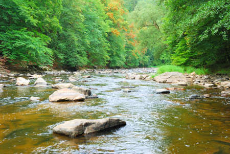 Fast shallow river flowing through a valley of green trees