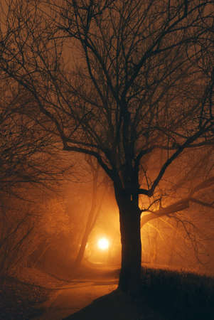 Mystical forest park after dark and tree silhouette with a street light