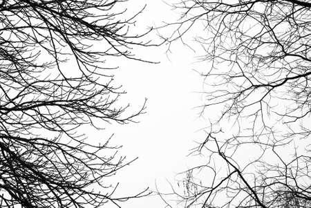 Bare leafless tree branches with white sky in the background photo
