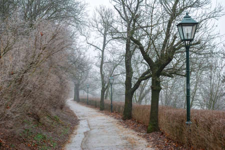 Street lamps in misty forest park photo