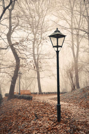 Street lamp in misty autumn forest park photo