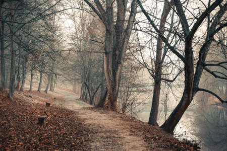 Lonely footpath running under leafless trees along a calm river photo