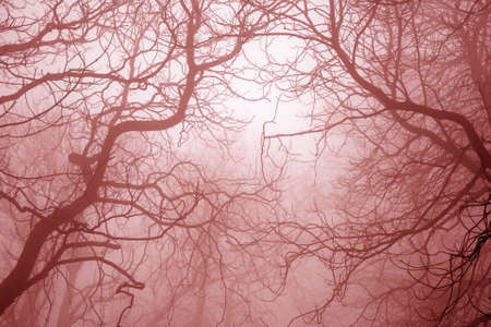 Bare tree branches in foggy mysterious and scary forest photo