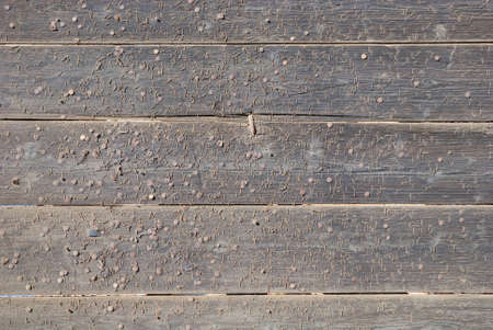 Part of an old wooden gate with many nails photo