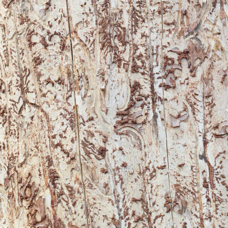 Abstract bare coarse wood texture background photo