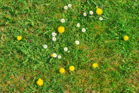 Grass texture with blooming flowers in spring Stock Photo