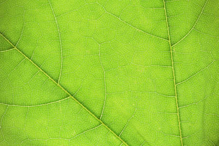 Abstract green leaf texture background