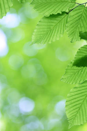 Fresh green leaves with smooth bokeh background Stock Photo