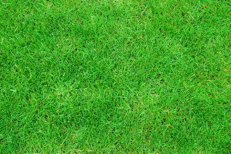 Springtime green grass texture  photo