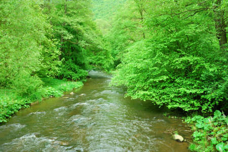 Small river flowing trough green forest