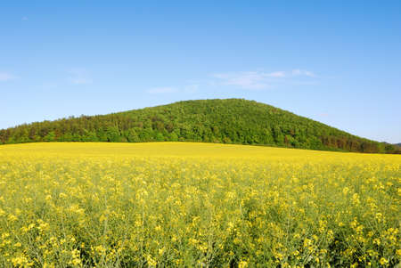 Yellow field of rapeseed with green hill and blue sky Stock Photo
