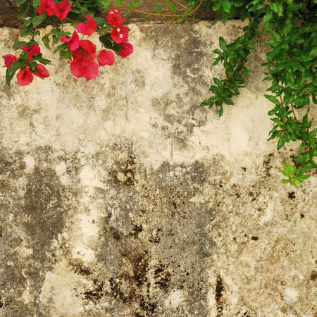 smudgy: Old weathered and dirty wall with flowers of bougainvillea Stock Photo