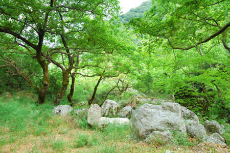 Green grove with old trees and big boulders photo