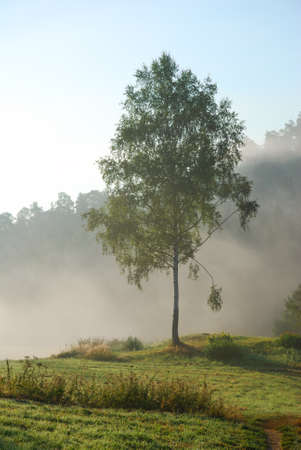 Green birch tree in the early morning fog photo