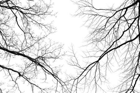 Bare tree branches on a pale white background Stock Photo