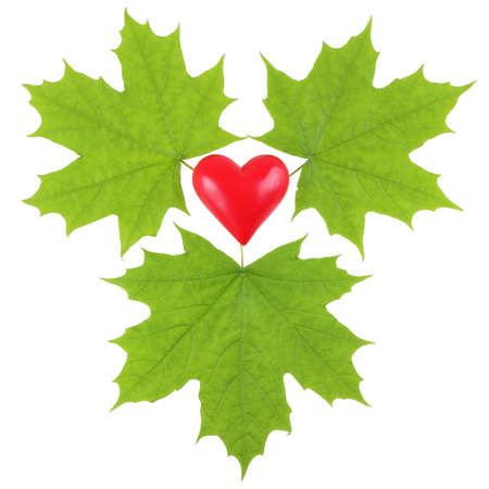 passion ecology: Green maple leaves surrounding a red plastic heart on a white background