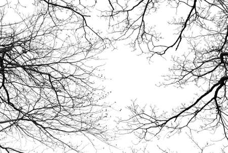 Bare tree branches on a pale white background photo