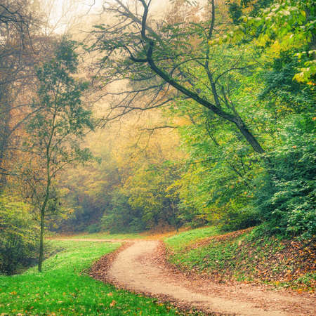 Colorful autumn park trees and road in the morning haze Stock Photo