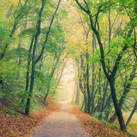 Autumn forest park road vanishing in the morning mist photo