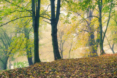 Autumn forest park at the river bank in the morning fog photo