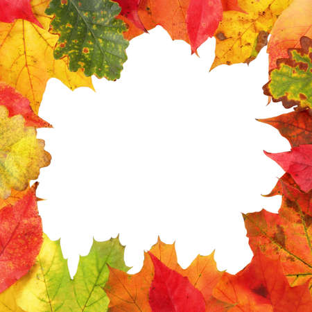 Frame composed of colorful autumn leaves photo