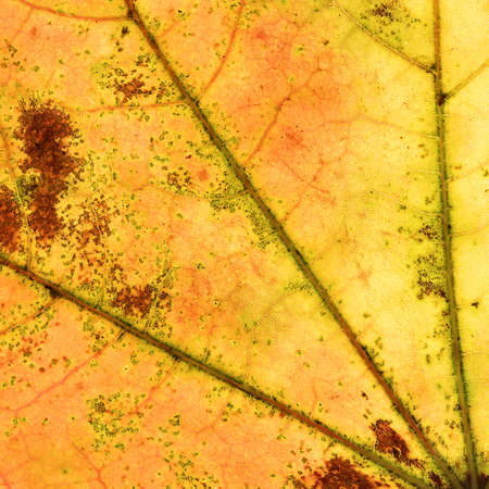 Abstract multicolored autumn leaf background photo