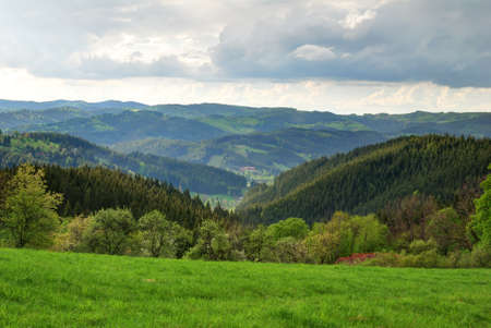 broad leaved tree: Green forest and valley highland landscape