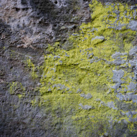 Grey rock covered by yellow lichen Stock Photo